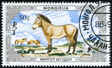stamp printed by Mongolia, shows Przewalski horse