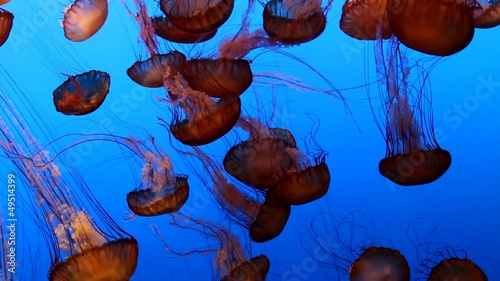 Wall mural beautiful jelly fishes in the ocean