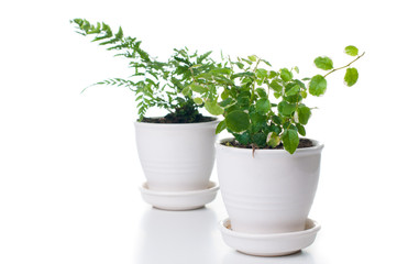 Home plants with green leaves