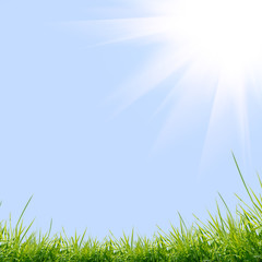 green grass with on the green background