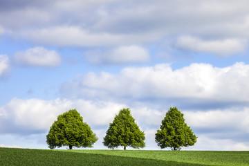 Sommertag drei Bäume auf der Wiese