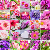 Gartenblumen Bestimmen – igelscout.info