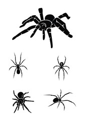 spider Collection Set