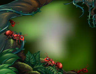 Ants at the rain forest