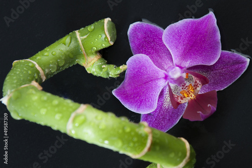 Bambus Orchidee Stock Photo And Royalty Free Images On Fotolia