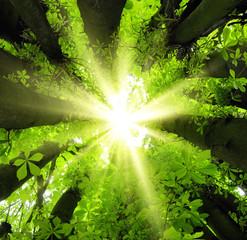 Sonnenstrahlen fallen durch Baumkronen