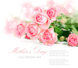 Tender pink roses isolated on white