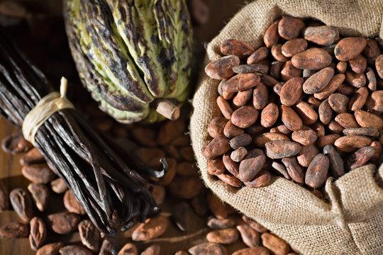 Cacao, fèves et cabosse