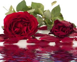 Beautiful bunch of roses