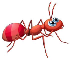 A big ant crawling