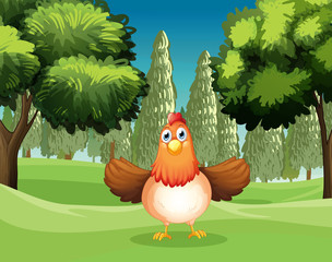A hen at the park