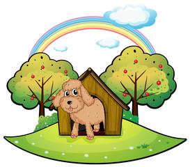 Foto auf Leinwand Hunde A dog with a doghouse