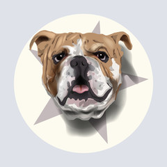 bulldog portrait vector illustration