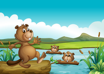 Beavers playing in the river with woods