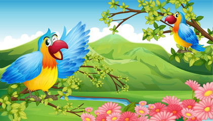 Two colorful parrots in a mountain scenery