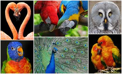 Vogel Collage 2