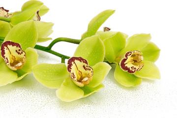 Obraz Orchidea - fototapety do salonu