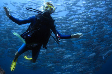 Wall Mural - Scuba diving