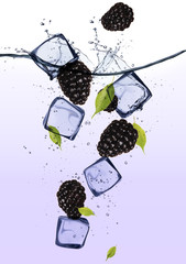 Poster In het ijs Blackberries with ice cubes