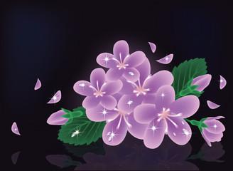 Sakura flowers card, vector illustration