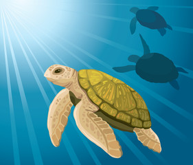 Cartoon turtles and sea