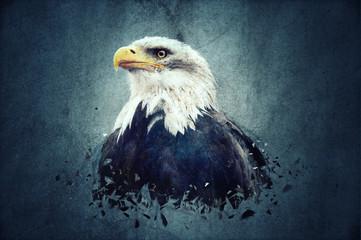 Eagle Fototapete