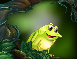 A frog at the rainforest