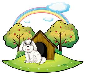 Foto auf Leinwand Hunde A puppy near an apple tree