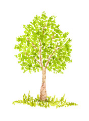 Watercolor Tree, Hand Drawn and Painted, Isolated on White
