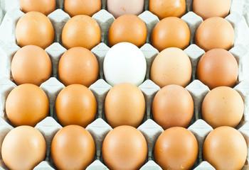 Fresh eggs in carton box
