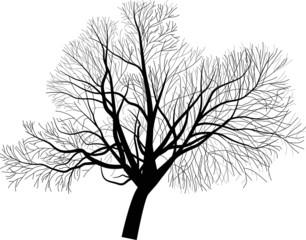 isolated large bare tree illustration