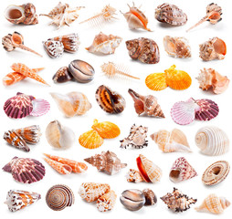 Seashell collection isolated on a white