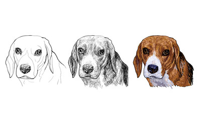 The portrait of Beagle in vector painting styles