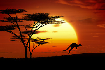 Photo sur Aluminium Australie kangaroo sunset australia