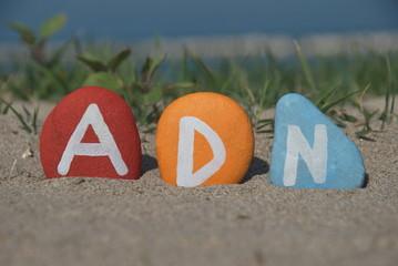 adn, deoxyribonucleic acid