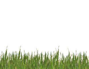 Obraz Green grass - fototapety do salonu