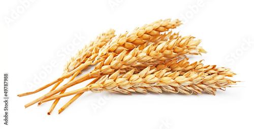 wheat sacks - 800×408