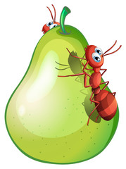 A pear with two ants
