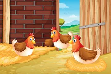 Poster Ranch Three chickens nesting