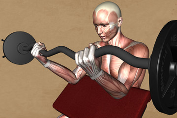 Anatomie Muskelatur
