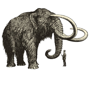 A huge mammoth in front of a little man