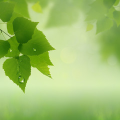 green summer, abstract natural backgrounds