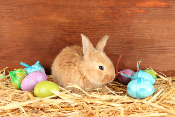Fluffy foxy rabbit in a haystack with Easter eggs