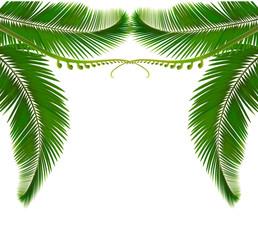Palm leaves on white background. Vector illustration.