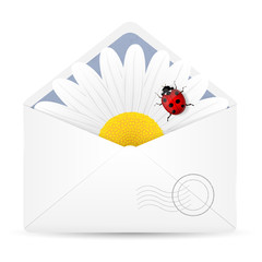 Open envelope with chamomile flower and ladybird.