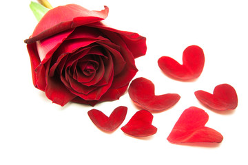 gift roses on valentine day, with heart leaves