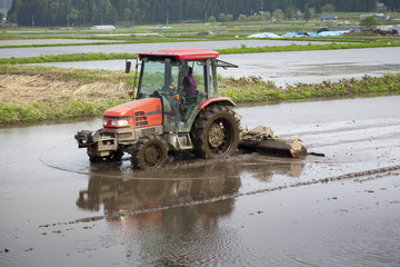 Wall Mural - Tractor Prepares Rice Paddy