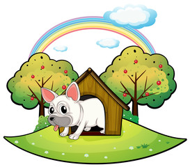 Poster Dogs A dog inside the dog house with an apple tree at the back