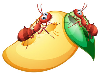 A sweet ripe mango with two ants