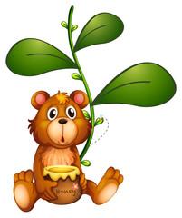 A bear near a vine plant